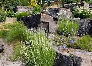 Stauden Für Steingarten : steingarten anlegen ziergr ser stauden bl hen wei blau vorgarten steingarten ~ Yasmunasinghe.com Haus und Dekorationen