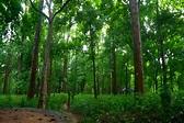 Conolly's Plot at Nilambur | Nedumkayam, Nilambur| Eco ...