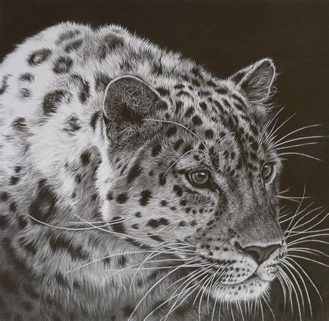 gallery famous pencil drawings  cats drawing art gallery