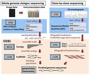 Ddbj Data Submission From Genome Project