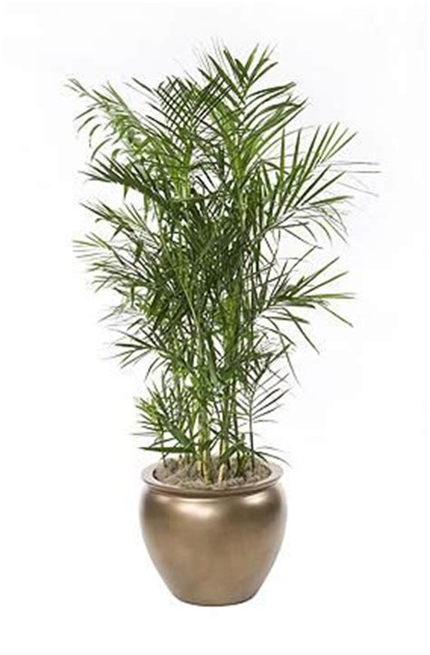 low light indoor plants safe for cats 5 low maintenance house plants kaodim