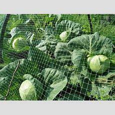 November Allotment Tips  Suttons Gardening Grow How