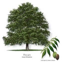 When Plant Fruit Trees Alabama