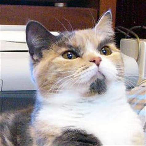 眉毛がすごい猫