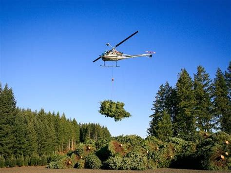 christmas tree farm redland oregon trees will be more expensive this year amid