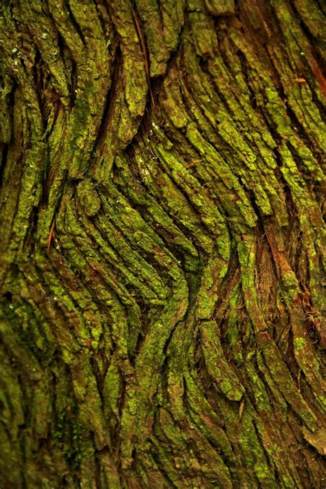 25 best moss for century tree moss texture imgkid com the image kid has it