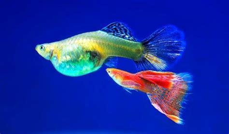 ornamental fish farming  beginners agri farming