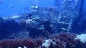 Kc Reef Artificial Reef Georgia