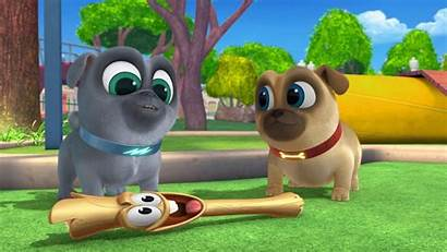 Pals Puppy Dog Going Pugs Mission Pot