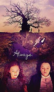 Always - Severus Snape & Lily Evans Fan Art (28828371 ...