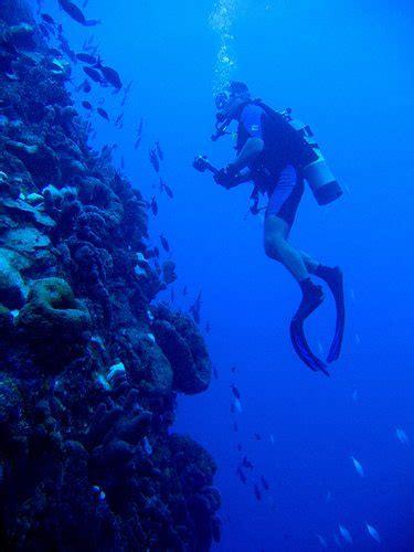 dive saba   dutch caribbean aquaviews