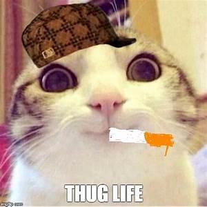 Happy cat - Imgflip