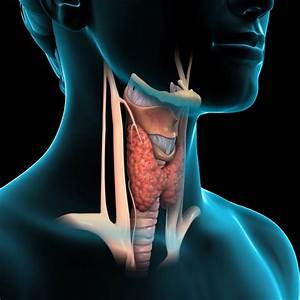 Cancer  Visual Guide To Thyroid Cancer