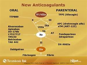 Warfarin And Beyond  Evolution Of Anticoagulation