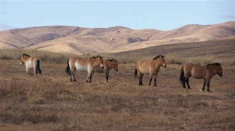 horse domestication history eurasia happened study across shows updated
