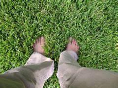 Comment Refaire Sa Pelouse : comment refaire ou semer sa pelouse et son gazon du jardin ~ Carolinahurricanesstore.com Idées de Décoration