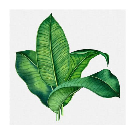 Monstera leaf print, palm leaf print, monstera deliciosa print,black leaf print, botanical print black white, affiche tropical, tropical art. TROPICAL LEAVES #4 * Contemporary fine art print of banana palm leaves - Wall Style