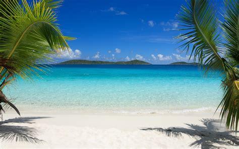 tropics beach palm trees sand hd wallpaper