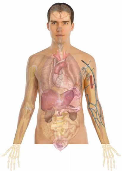 Human Anatomy Male Adult Lines Clip Basics
