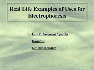 PPT - Electrophoresis PowerPoint Presentation - ID:175241