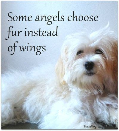pet loss quotes  comfort  grief sympathy card