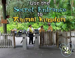 Secret Entrance To Animal Kingdom