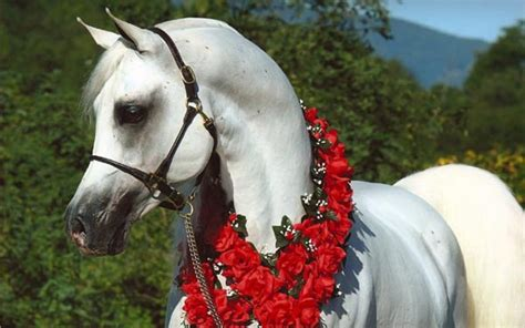 horses animals zone animal once