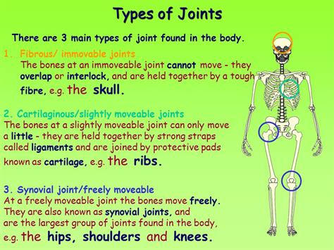 Fibrous, Cartilaginous And Synovial Joints