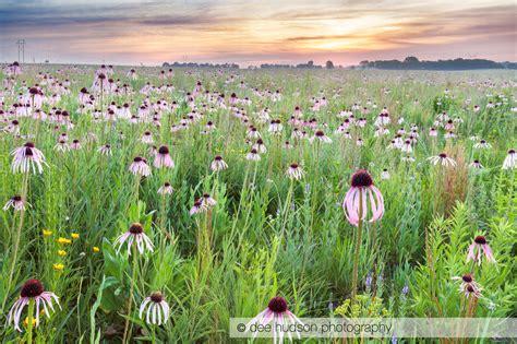 nachusa grasslands blog