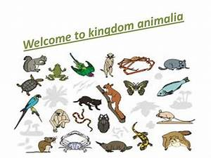 Classification of animals in the Animal Kingdom - Essay