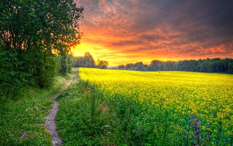 Beautiful Field Wallpapers   Most beautiful places in the ...