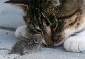 cat and mouse cat and mouse 1funny