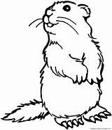 Prairie Erdmaennchen Dog Coloring Tiere Drawing Stehendes Animals Ausmalbilder Malvorlage Malvorlagen Ausmalbild Gratis Weitere Herunterladen Dieses Bild sketch template