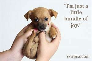 "Cute Puppy Caption - ""I'm just a little bundle of joy ..."