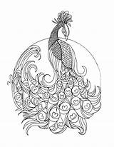 Peacock Realistic Coloring Pages Colouring Getdrawings sketch template