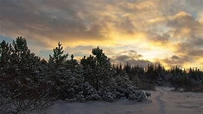 Forest Winter Computer Trees Fir Snow Background