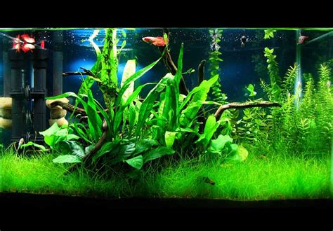 low tech excel based planted aquariums a guide bits and