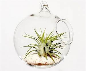 Acheter Terrarium Plante : un terrarium pour son int rieur blog fran ais d 39 etsy ~ Teatrodelosmanantiales.com Idées de Décoration