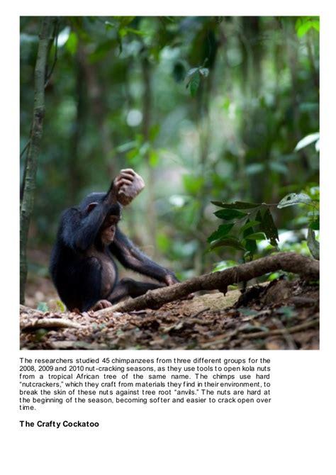 Animals Behaviors That Make Them Human