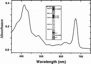 Typical Absorption Spectrum Of A Preparation Of D1  D2