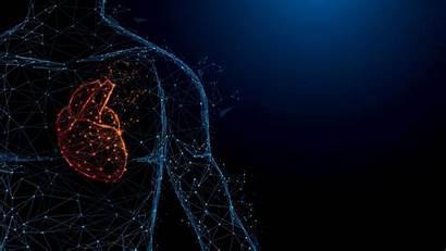 Human Health Earth Google Heart Anatomy Lines