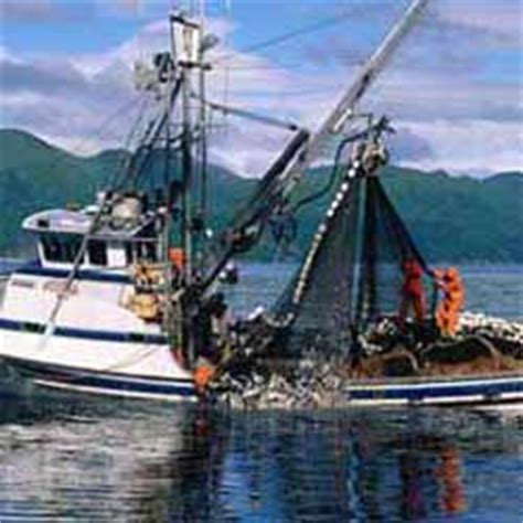 Crab Fishing Boat Jobs by Alaska Fishing Jobs Seafood Industry Employment Jobmonkey