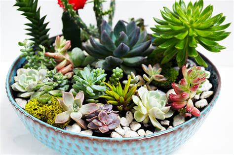 what to do with succulents how to make a succulent garden archives quinn cooper style elevate your style