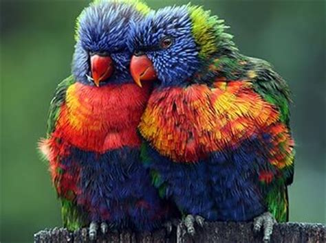 colorful animals  brings vibrancy  nature wow
