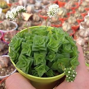 Sukkulenten Arten Bilder : sukkulenten arten die vielf ltige durstk nstler sind ~ Lizthompson.info Haus und Dekorationen