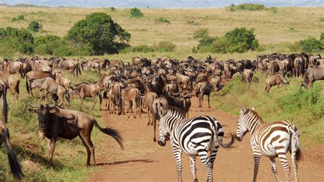 Best Safaris In Kenya Top 3 National Wildlife Parks And Reserves In Kenya