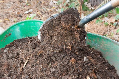 Gardening Uses For Fireplace Ashes