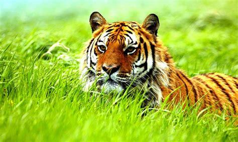 Animal Planet Live Wallpaper - animal wallpapers cool pets animal planet animal