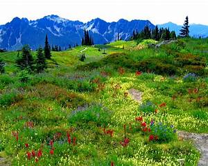 Green Mountain Meadow With Flowers In Multiple Colors ...