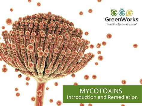 mycotoxins introduction  remediation greenworks